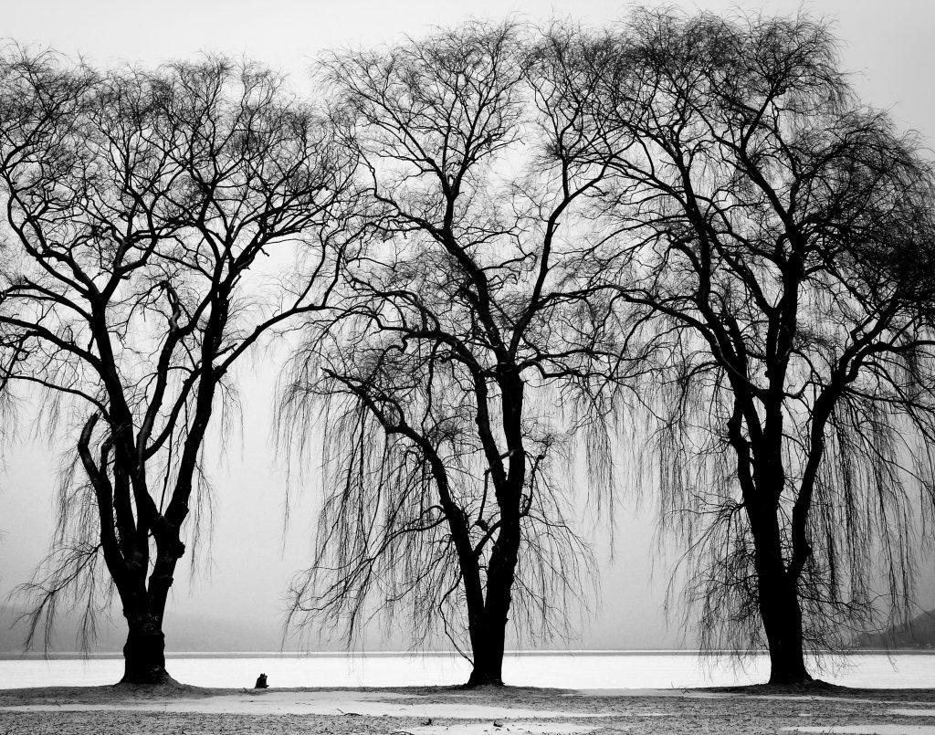 Tree Triplets