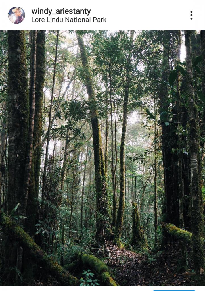Hutan-hutan di Lembah Lore dikenal sebagai rumah seribu anggrek.