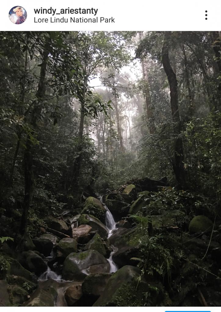Air terjun di tengah hutan menjadi tempat melepas dahaga.